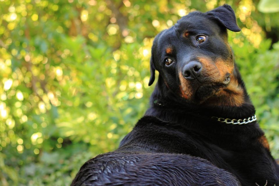 Votre chien se démange ? Lutter contre les parasites «Naturellement»
