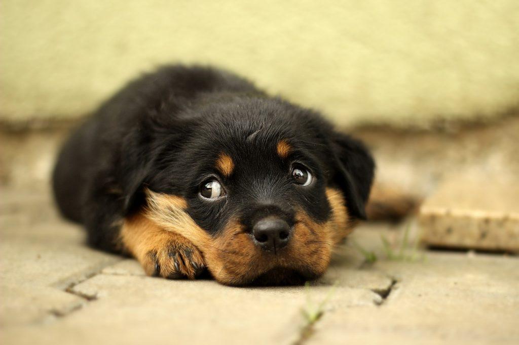 Que faire si vous voyez un chien dans une voiture par une journée chaude ?