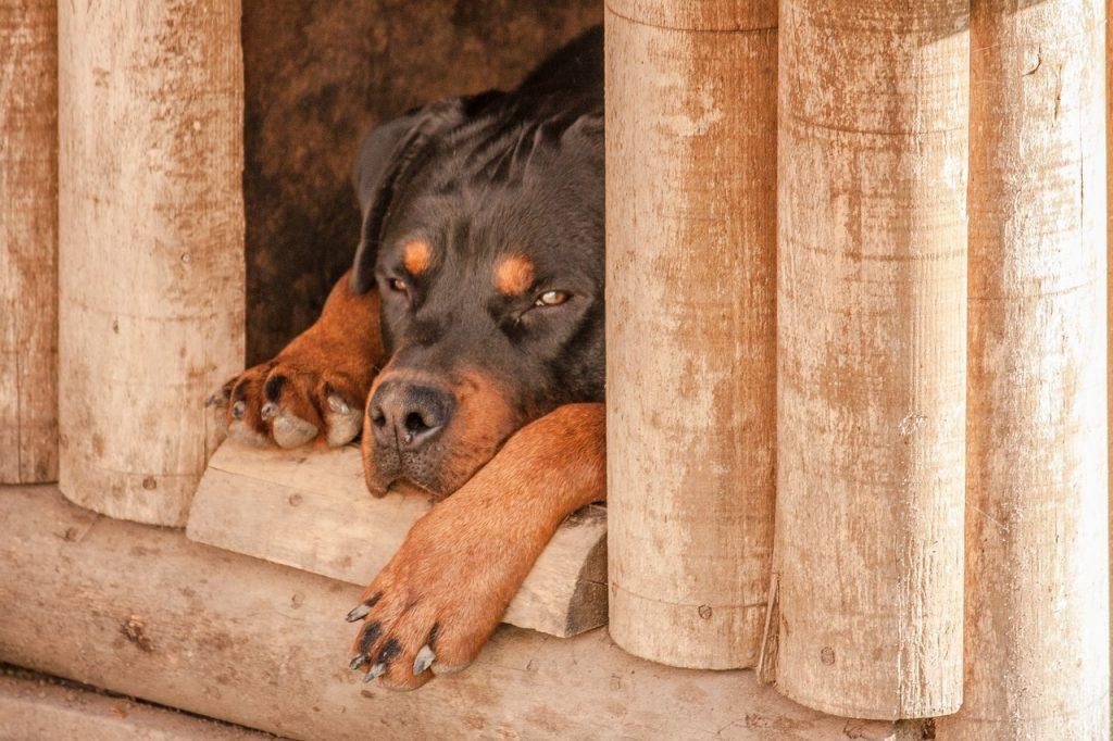 Conseils pour traitrer les coups de chaleur chez le chien