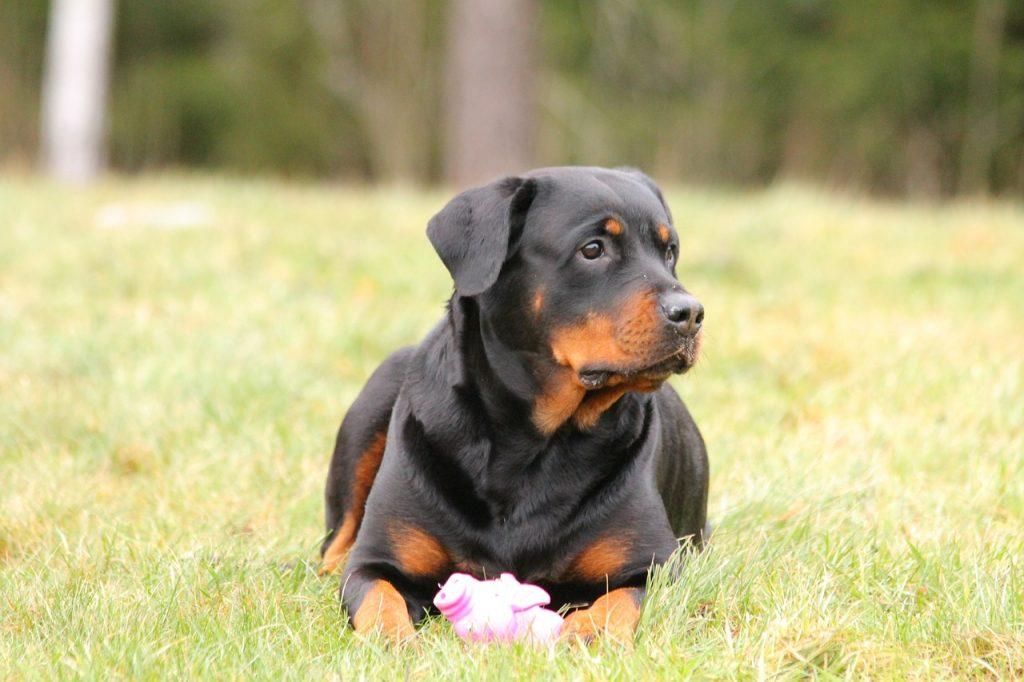 Choisir le bon panier pour votre chien