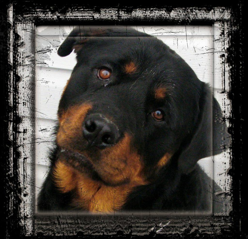 Média - Education du chien